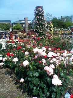 若園バラ公園