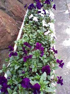0306_紫
